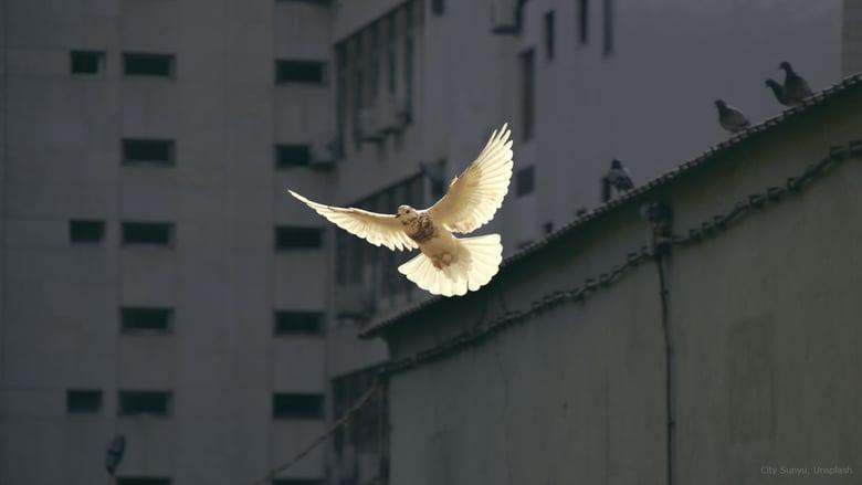city sunyu-dove-unsplash